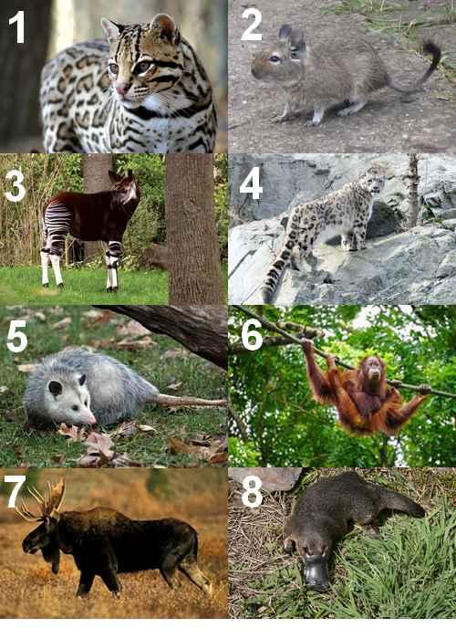 Animal en O - Quel animal commence par un O